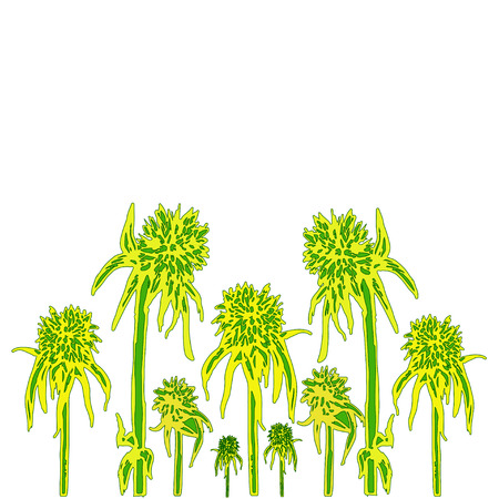 Flower of the thorn is like a hedgehog. Blossoming, floral pattern, isolated on white background. Vector hand drawn illustration. Colored yellow green flower cartoon background.