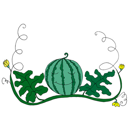 Cartoon watermelon in foliage and flowers isolated on white background.Vector hand drawn illustration striped watermelons, coloring page for adult and children,art book, textile, print, poster, design Illustration