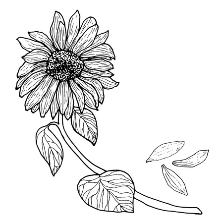 Black white Sunflower on a branch with leaves. Flower bud, isolated, hand drawn. Vector illustration design.Color page for adults and children. Book, textile, print, poster, design, sticker,card Иллюстрация