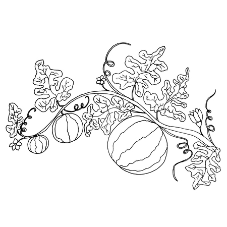 Cartoon black and white  watermelon in foliage and flowers isolated.Vector hand drawn illustration striped watermelons, coloring page for adult and children,art book, textile, print, poster, design
