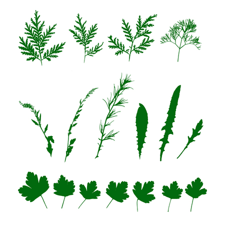 Set green grasses, wild plants. Isolated pattern.