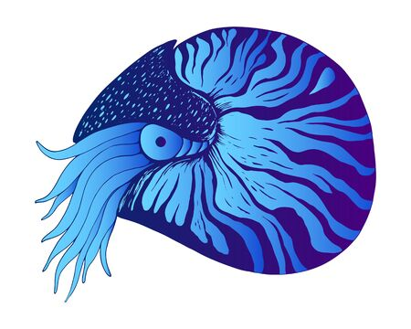 Nautilus colorful decorative animal, blue and dark blue gradient, isolated on white background. Vector hand drawn illustration. Ocean mollusc with tentacles.