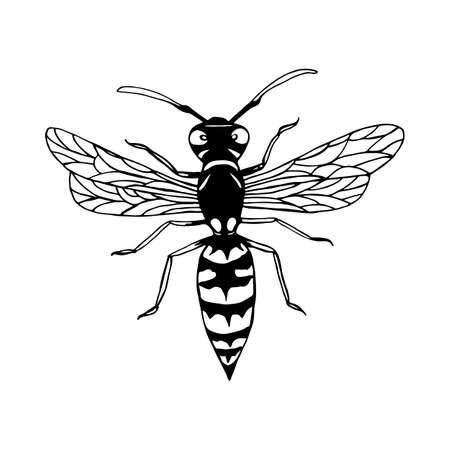Wasp cartoon sketch style insect coloring page, isolated on white.