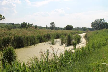 rushy: Small river