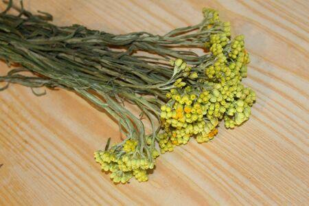 angustifolium: Helichrysum arenarium on the table