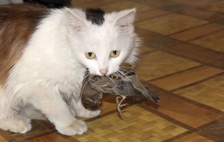 caught: Cat  caught a bird Stock Photo