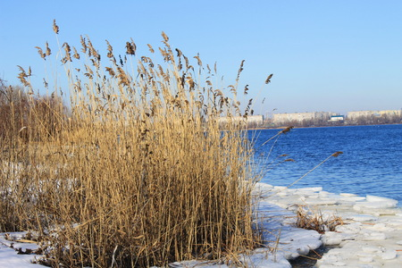thickets: Thickets of reeds