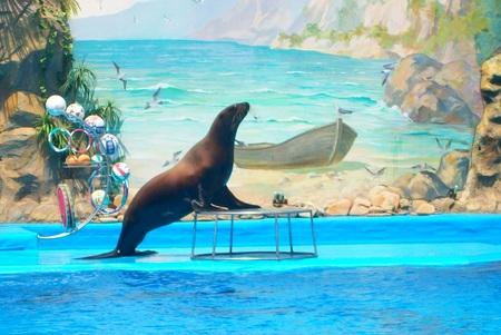 sea lion: Sea lion performance Editorial