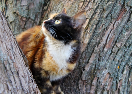 face in tree bark: Cat on the tree