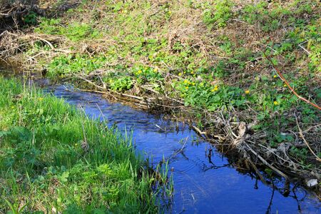 small river: Small river on spring Stock Photo
