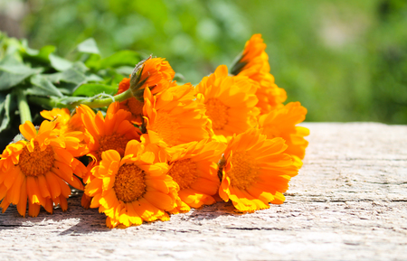 Calendula flowers on the wooden background Imagens