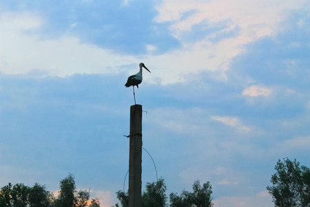 Stork standing on a concrete pole