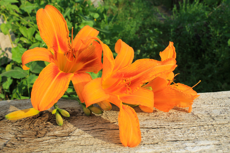 orange lily: Orange lily on the wooden background