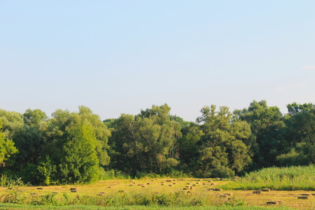 haymaking: Agricultural landscape with hay bales in meadow