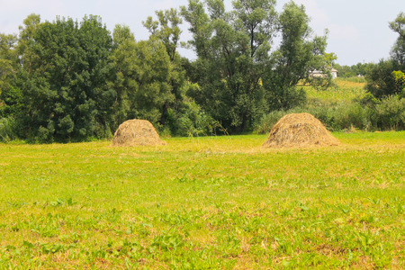 Haystacks on the meadow Stock Photo