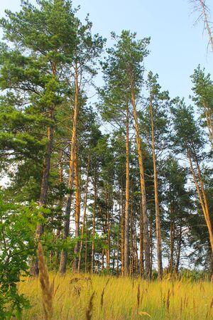 coniferous: Coniferous forest