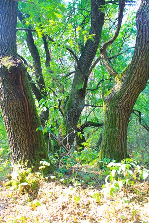 ecosistema: Verde forestal