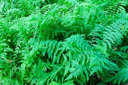 tropical native fern: Fern
