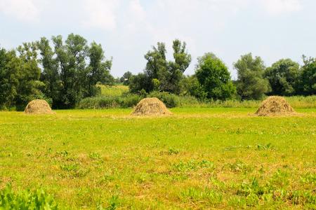 haymaking: Haystacks on the meadow Stock Photo