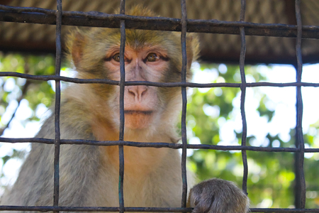 Monkey in a cage Stock Photo