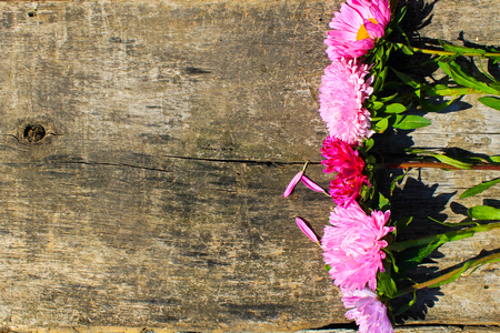 aster flowers: Aster flowers on the wooden background
