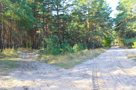 on forked: Forked sandy roads in  pine forest Stock Photo