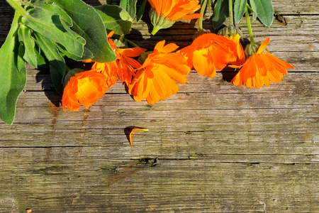 pot marigold: Calendula flowers on the wooden background Stock Photo
