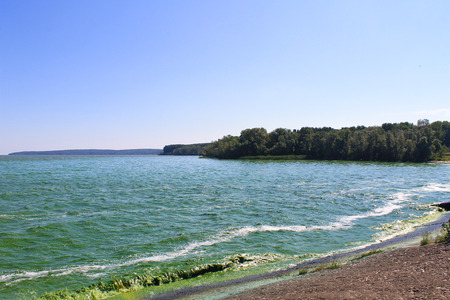 dirtiness: Blooming green water in reservoir on Dnieper river