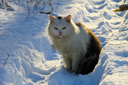 christmas pussy: Cat in a snow
