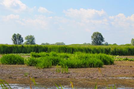 Aquatic plants in a swamp