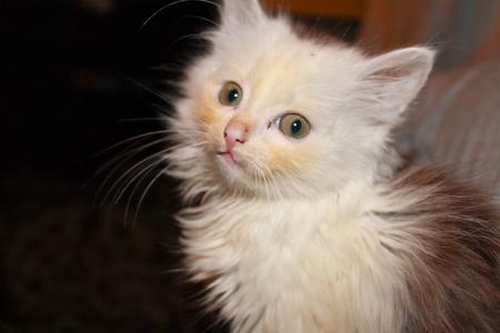 Portrait of kittens
