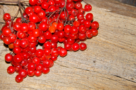 Red viburnum berries on the wooden background