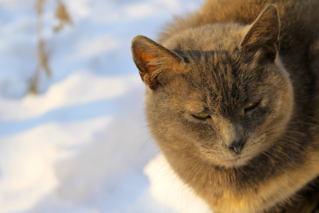 Portrait of the grey cat against white snow Stock Photo