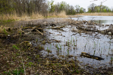 swampy: Swamp in forest Stock Photo