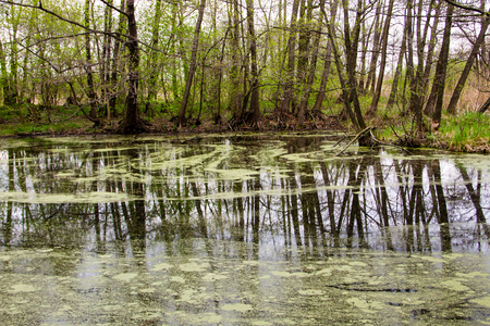 Forest lake with green algae on water surface