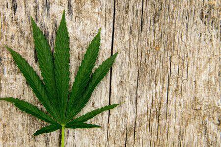 legalize: Green cannabis leaf on wooden background Stock Photo