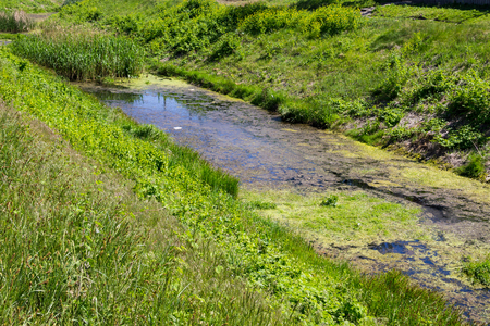 Water pollution in a urban river