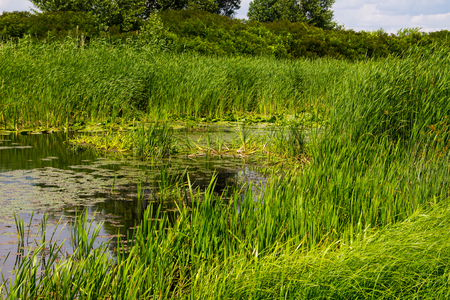 swampy: Swampy river overgrown with water plants