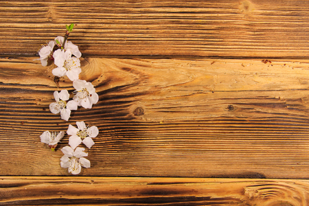 Flowers of apricot tree on wooden background. Spring blossom on wood desk with copy space
