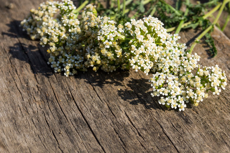 millefolium: White yarrow flowers (Achillea millefolium) on rustic wooden background. Copy space Stock Photo