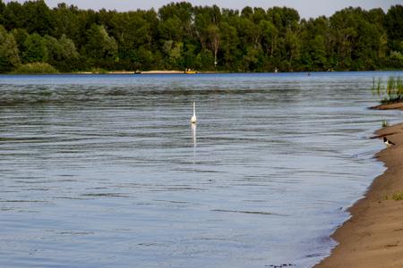 Little egret or white heron (Egretta garzetta) on the river Dnieper 版權商用圖片