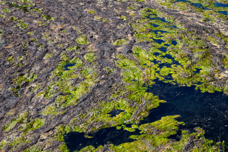 Green algae in the water surface