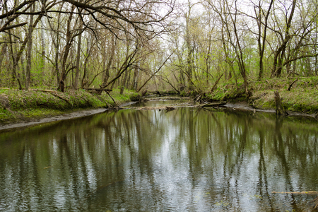 River in green forest on spring