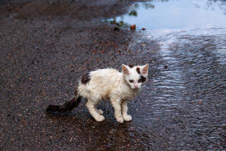 Nasses obdachloses trauriges Kätzchen auf einer Straße nach einem Regen. Konzept zum Schutz obdachloser Tiere Standard-Bild
