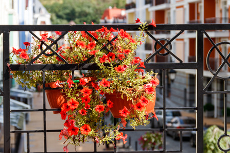 Flower pot with petunias flowers hanging on the wrought iron grill of the terrace