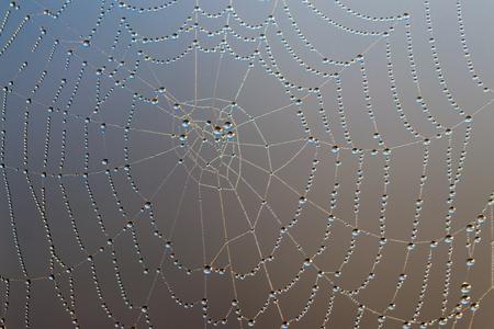 Spinnenweb met dauwdruppels. Spinneweb close-up
