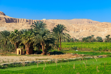 Fertile banks of the Nile. Valley of the Nile river. Palm trees and fields on Nile riverside in Egypt Banco de Imagens