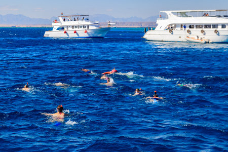 People snorkeling over the coral reef in the Red Sea