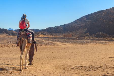 Young woman tourist riding camel in Arabian desert, Egypt Foto de archivo