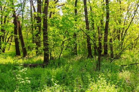 Vista della foresta verde in primavera Archivio Fotografico